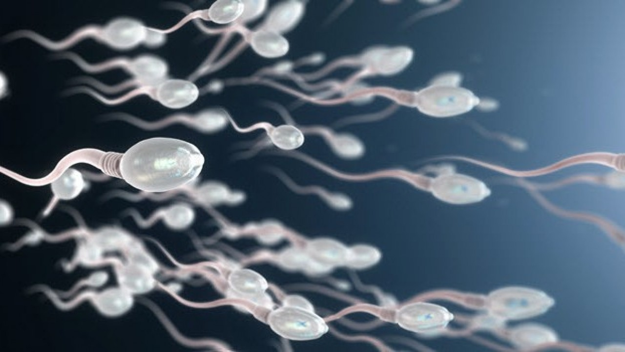 How Sperm Mapping Can Help Sterile Men Become Dads